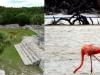 web-mayanruins-flamingos-reduced2