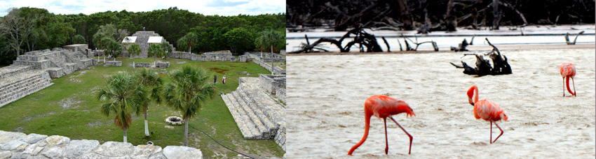 Web-MayanRuins-Flamingos-Reduced2
